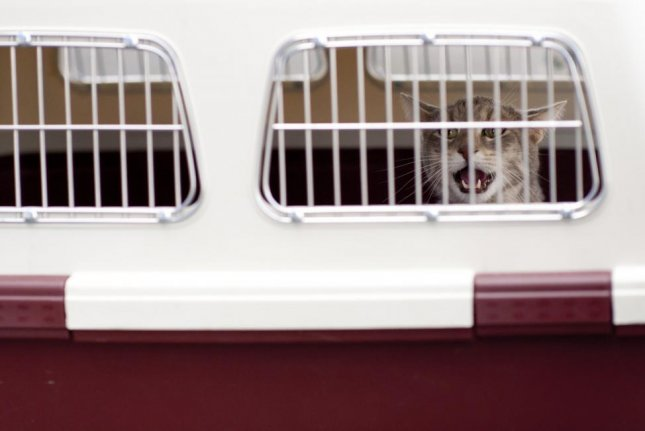 A cat that escaped from its carrier during a flight from Belgaluru, India, to Delhi was found at the airport after four days of eluding security. Photo by skeeze/Pixabay.com