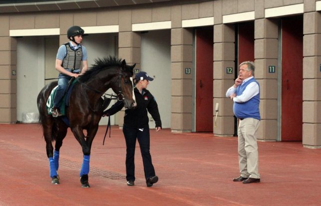 Sir Michael Stoute, who is within one win of a Royal Ascot training record, has won all over the world. Here is oversees Snow Sky before the Group 1 Hong Kong Vase in 2014. (HKJC photo)
