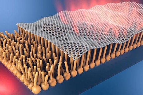 Lipid layers may allow graphene to be used in the human body