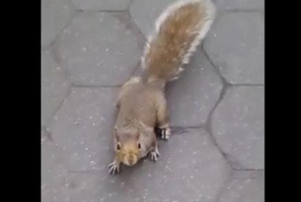 A seemingly adorable squirrel lures a man to his doom -- or at least his momentary inconvenience. Screenshot: Newsflare