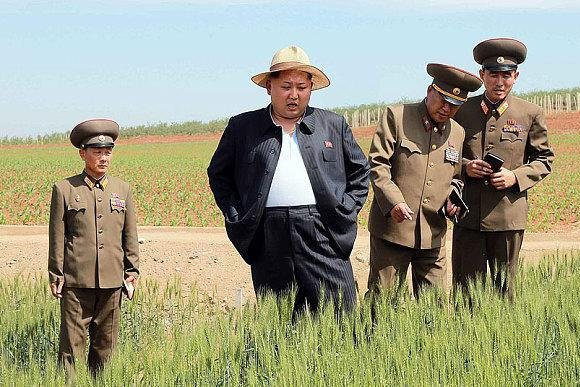 Kim Jong Un touring a wheat field at Farm No. 1116 under the supervision of the Korean People's Army Unit 810 in June. Kim's visit to food-growing areas and factories have more than doubled in the past year, and food has become an urgent priority in North Korea. File Photo by Rodong Sinmun/Yonhap