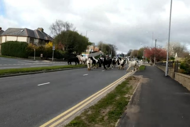 Horse block a British road during rush hour. Screenshot: HereComes Dizz/YouTube