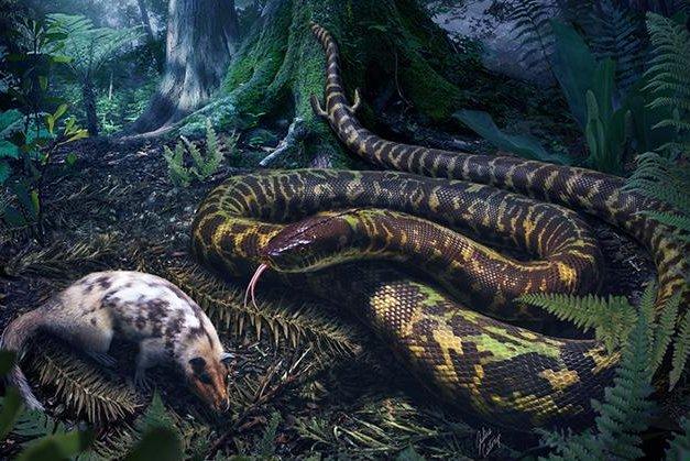 A rendering shows an ancestral snake stalking prey at night. Photo by Julius Csotonyi/Yale University