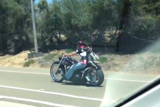 Watch Dog Rides Motorcycle On Owner S Back Upi Com