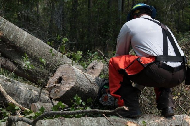 Protection of national forests could be diminished if rules proposed by the administration are enacted. Photo courtesy of U.S. Fish and Wildlife Service