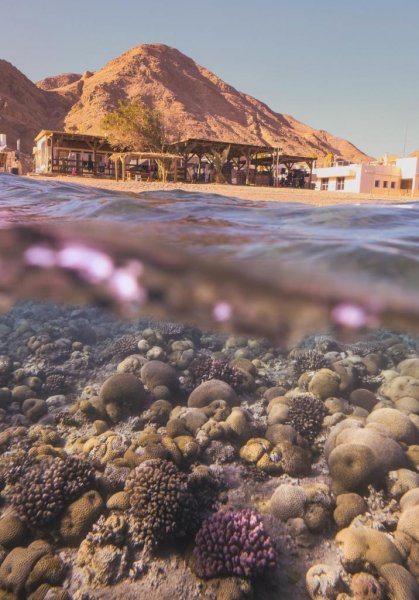 Researchers studied corals in the Gulf of Aqaba, at the northern tip of the Red Sea, to gain understanding of their particular resistance to higher temperatures -- and learn how to better protect them. Photo by Romain Savary/EPFL