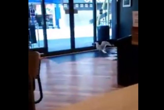 A seagull flees a store in England with a stolen bag of chips. Screenshot: Shields Gazette/Facebook