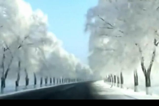 Hard rime -- frozen fog -- covers the trees along a Chinese road. Newsflare video screenshot