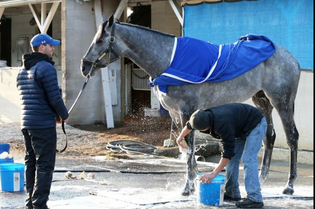 Essential Quality was installed Tuesday as the favorite for the 147th Kentucky Derby. Photo courtesy of Churchill Downs