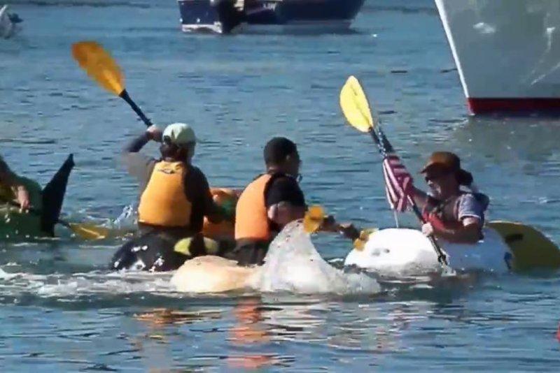 People paddle pumpkins for the sixth annual Pumpkin Regatta in Stillwater, Minn. Storyful video screenshot