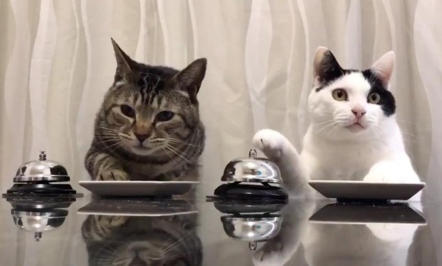 Watch: Hungry cats ring bells for treats - UPI.com