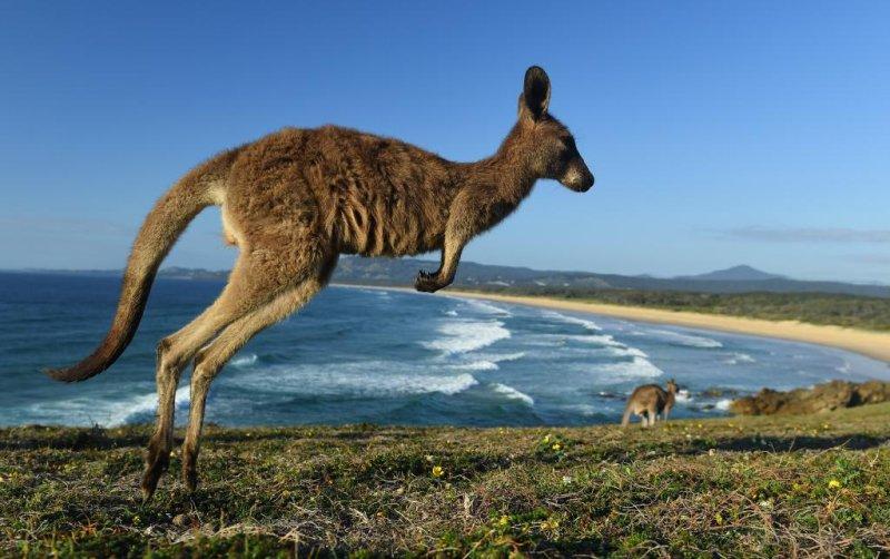 half off 1d96f a6957 Kangaroo breaks into Australian home, locks itself in ...