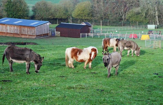 Miniature Horse Shelter : Animal rescue group offers miniature donkeys for