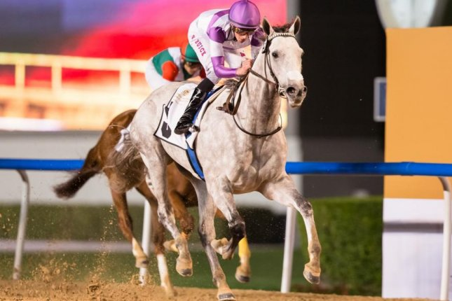 Parsimony, trained by American Doug O'Neil, wins Thursday's Curlin Handicap in Dubai and now is a candidate for World Cup night. Photo by Erika Rasmussen, courtesy of Dubai Racing Club
