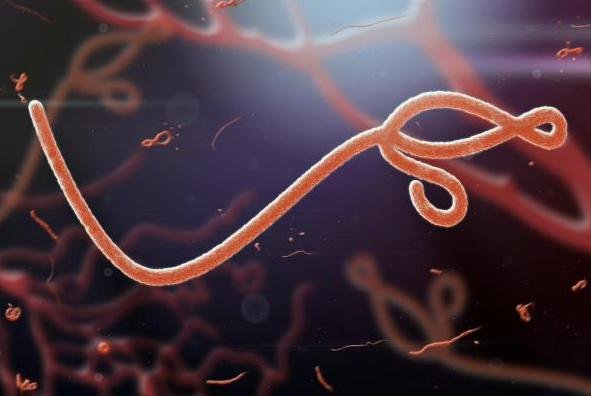 The World Health Organization declared Sierra Leone free from Ebola transmissions, marking 42 days, or two incubation periods, without an Ebola case. Photo by jaddingt/Shutterstock