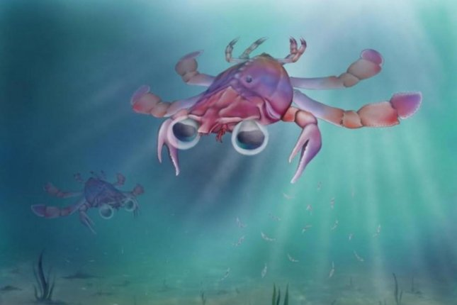 An artistic rendering reveals the bizarre features of a new species of crab from the Cretaceous era, Callichimaera perplexa. Photo by Elissa Martin / Yale Peabody Museum of Natural History