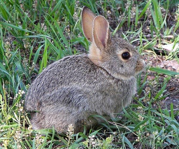 Dozens of rabbits left at roadside