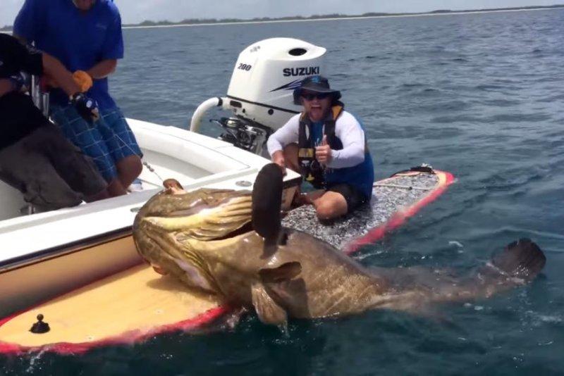 Fisherman on a paddleboard lands 400-pound grouper