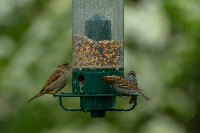 Garden bird feeders created local interspecies hierarchies dominated by larger species. Photo by Pixabay/CC