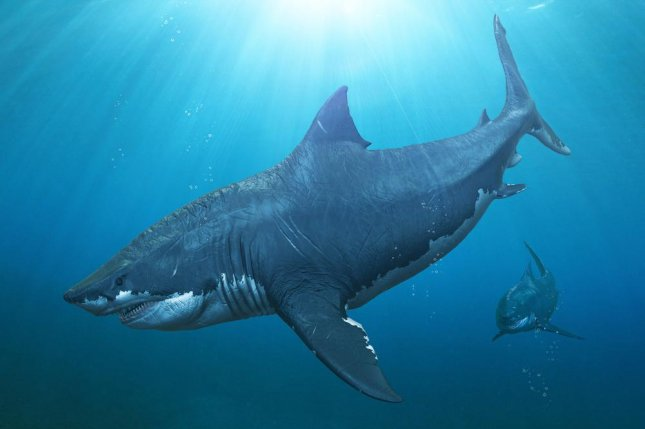 Megalodon, the largest shark in Earth's history, lost out to new predators as its food sources dried up. Photo by Herschel Hoffmeyer/Shutterstock