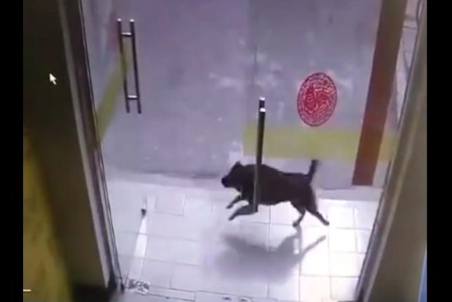 A dog chasing a cat outside of a Chinese shop is headed for disaster. Screenshot: The People's Daily, China/YouTube