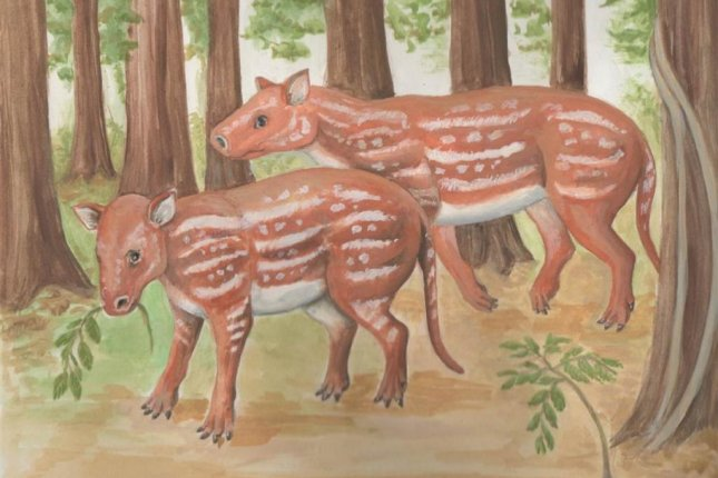 Ancient Relative Of Horses Rhinos And Tapirs Once Roamed