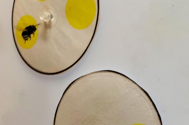 Bees can be trained to differentiate between greater and less quantities. Photo by Lars Chittka