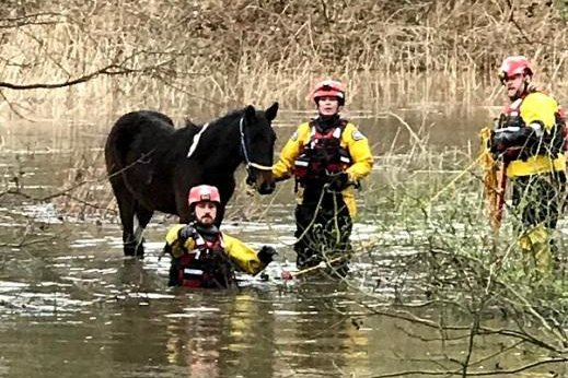 An RSPCA specialist water rescue team was dispatched to save a pony spotted stranded in a flooded field in England. Photo courtesy of the RSPCA