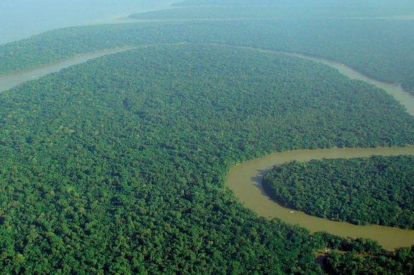 Aerial view of the Amazon Rainforest (File/Lubas/Wiki Commons)