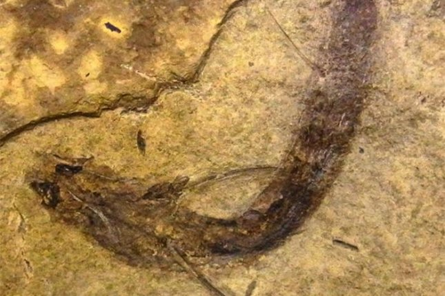 An ancient fish fossil was found with preserved rods and cones. Photo by Gengo Tanaka/Nature Communications.