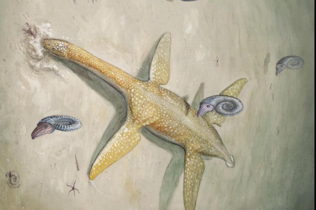 The newly discovered marine reptile likely hunted relatively small prey like fish and squid. Photo by Uppsala University