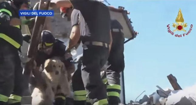 Members of Italy's fire and rescue service, Vigili del Fuoco, lift Romeo the Golden Retriever from the rubble in Amatrice on Friday. Romeo was buried after the 6.2 magnitude earthquake struck the region, but managed to survive for nine days in a pocket under the rubble. Screenshot from ABC News/Vigili del Fuoco/YouTube