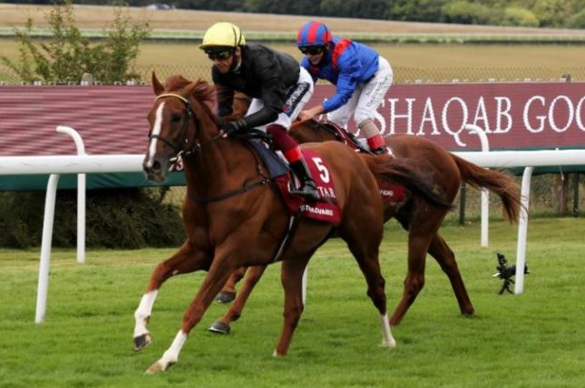Stradivarius wins the Goodwood Cup for the fourth straight year, may be headed to the Arc. Photo courtesy of Goodwood Racecourse, via Racenews