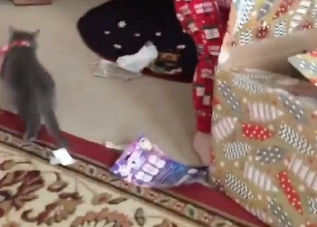 A sneaky kitten added a bit of drama to a 3-year-old's Christmas Day surprise by sneaking out of its box just as it was being opened. While the empty box initially confused the young girl, she eventually spotted the stealthy kitten and was overcome with joy over her new pet.