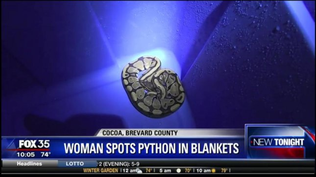 A Florida woman washing her pet rat's blanket found a python trying to eat one of the blankets. Screenshot: WOFL-TV