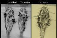 Comet particle tracks in aerogel. (NASA/JPL)