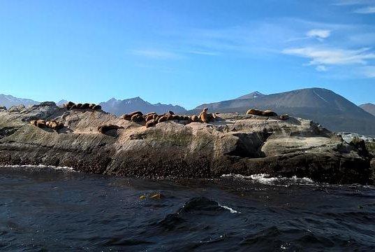Heatwave turns 'gateway to Antarctic' into beach town