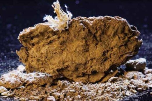 Human excrement, dated to roughly 14,500 year ago, at the Paisley Caves suggest the newly protected site is the earliest example of human habitation in North America. (Dennis Jenkins/University of Oregon)