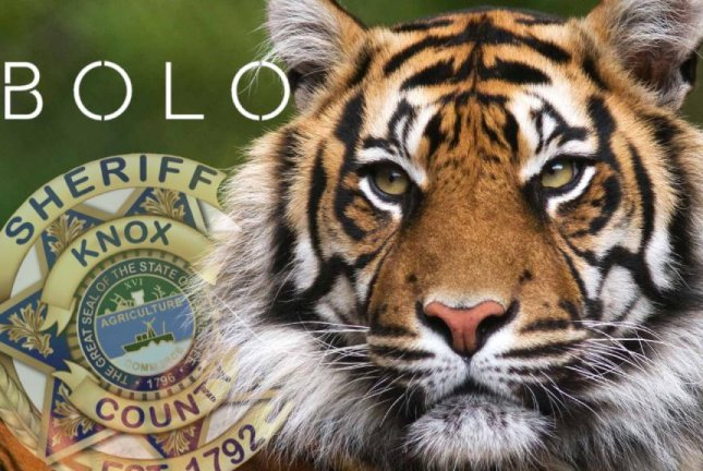 The Knox County Sheriff's Office issued a be on the lookout order after a deputy spotted a tiger wandering loose in Knoxville. Photo courtesy of the Knox County Sheriff's Office