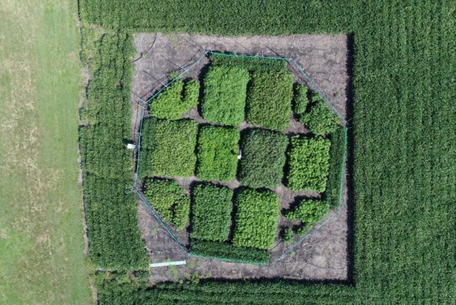 An aerial photograph reveals several experimental plots of cassava crops at the University of Illinois SoyFACE research facility. Photo by Beau Barber/RIPE project