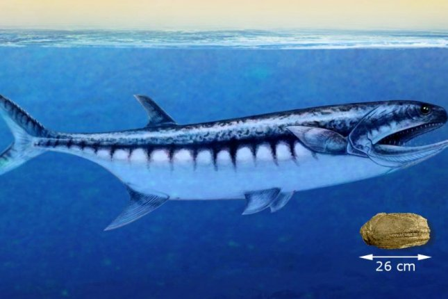 Paleontologists say the newly discovered species hunted like great white sharks, biting their prey before swallowing them whole. Photo by Nadine Bösch/University of Zurich
