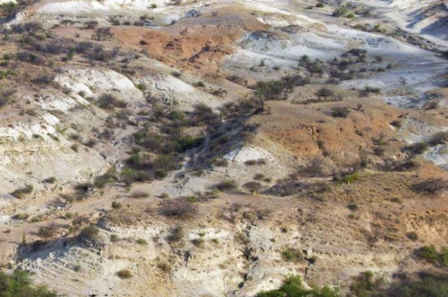 An aerial view of red-brown Oltulelei Formation channel deposits superimposed on white lacustrine deposits of the Olorgesailie Formation in the southern Kenya rift valley. Photo courtesy of The Geological Society of America
