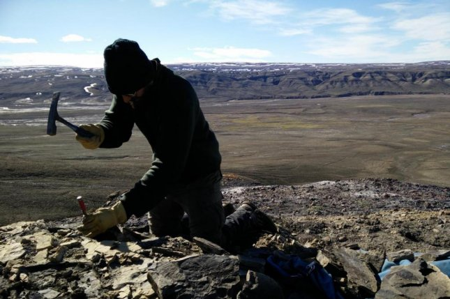 Researcher Christopher West is photographed digging for ancient plant fossils among the shale deposits on Canada's Ellesmere Island. Photo by Markus Sudermann