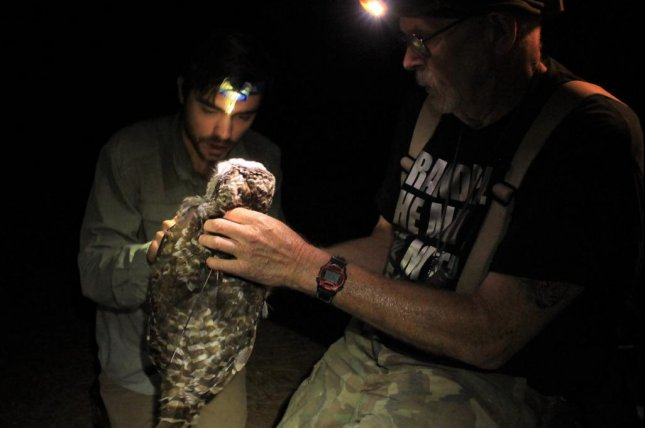 Scientists attach a GPS tracking device to a captured owl. Photo by Nick Kryshak