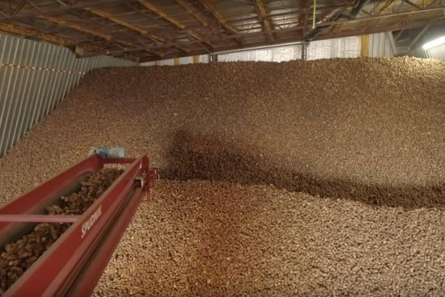 After losing a substantial percentage of their crop to an early winter freeze, growers are worried about more potatoes rotting in storage this year. Photo courtesy of the Idaho Potato Commission