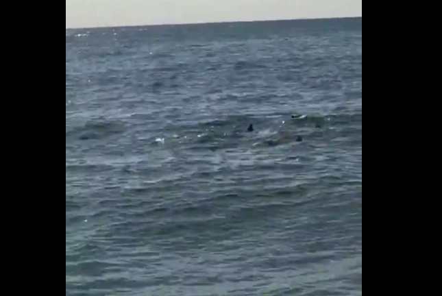 Coney Island Shark Spotted
