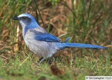 Study: Habitat 'clusters' could save birds