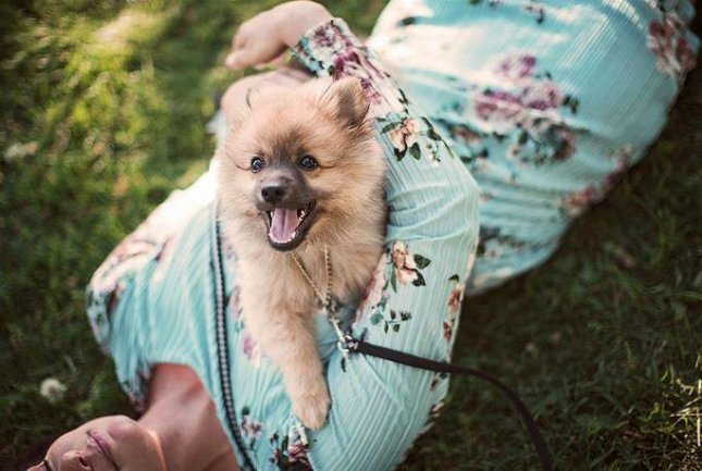 Musti Group, a pet supply company based in Norway, wants employees to take time off to bond with their new pets. Photo courtesy of Musti Group