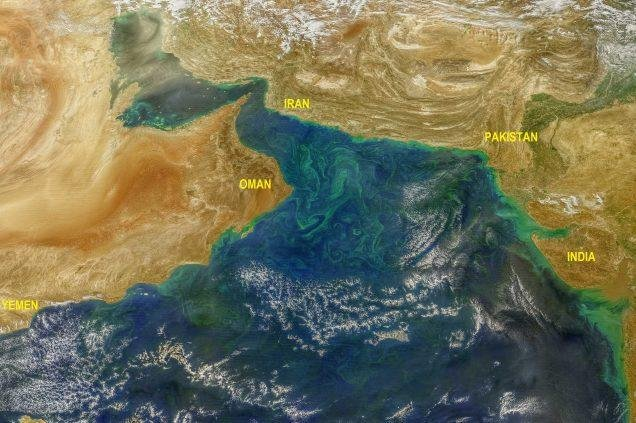 Noctiluca blooms in the Arabian Sea, seen from space. Photo by Norman Kuring/NASA