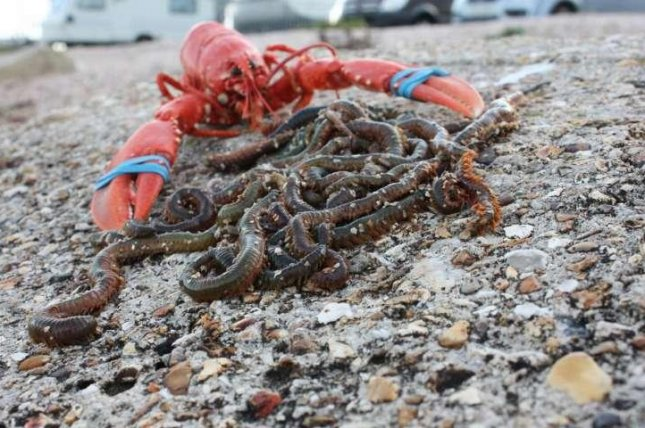 Bait worms are a surprisingly lucrative industry. Photo by Gordon Watson